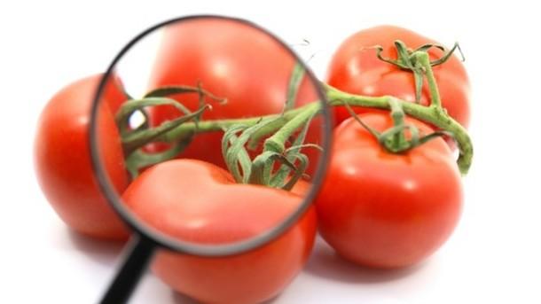 Élelmiszeripari fordítás